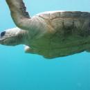 to turn turtle